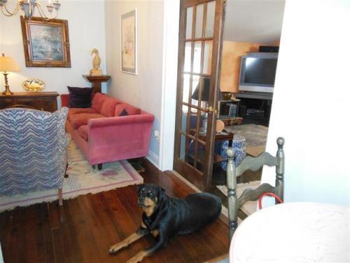 dog listing