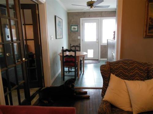 dog listing2