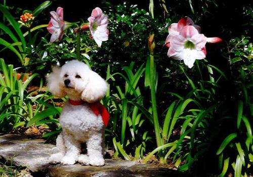 A dog by the flowers... Cute but has nothing to do with the house.